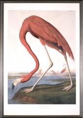 John James Audubon print