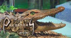 Predators: The Exhibit