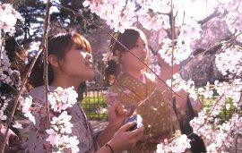The Tsunami & the Cherry Blossom