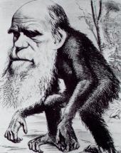 Darwin's ape