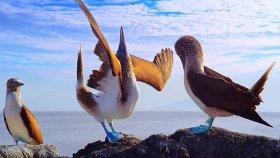 Galapagos 3D: Nature's Wonderland