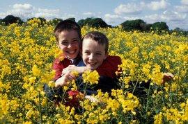 Alex Etel and Lewis Owen McGibbon in Millions